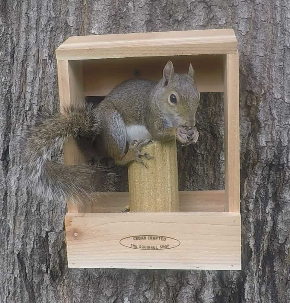 Box with Squirrel