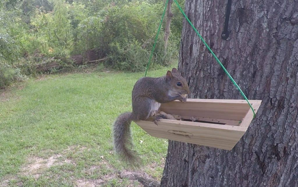Swing Basket Squirrel Feeder