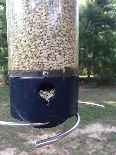 Squirrel Proof Bird Feeder with Safflower Seed