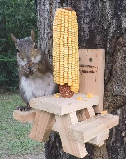 Squirrel on Picnic Table