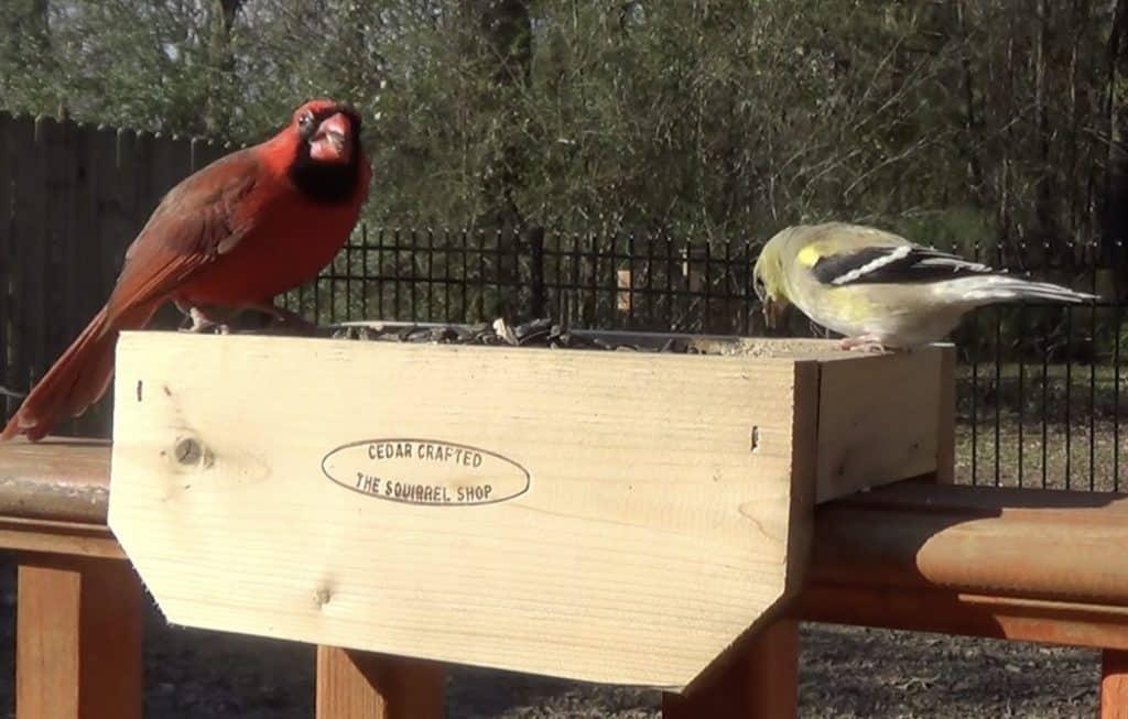 Finch and Cardinal Rail Feeder