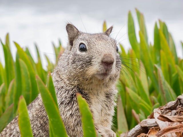 Squirrel Looking for Danger