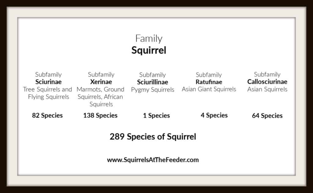 How Many Types of Squirrel