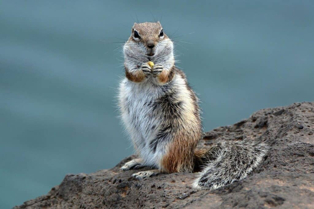 What Animals Eat Chipmunks