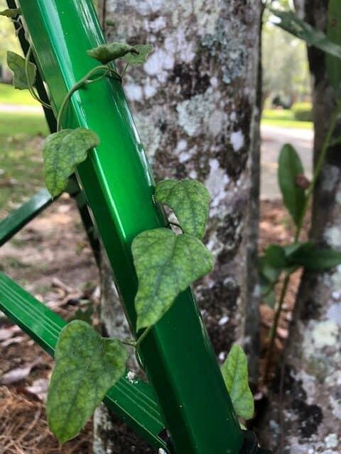 Integrate Sprinkler with Landscape