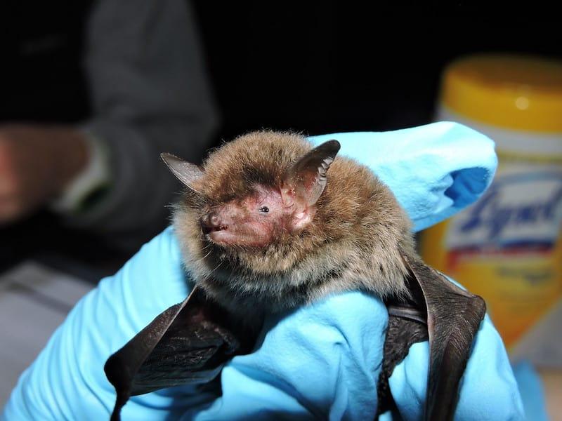 Protected Bat