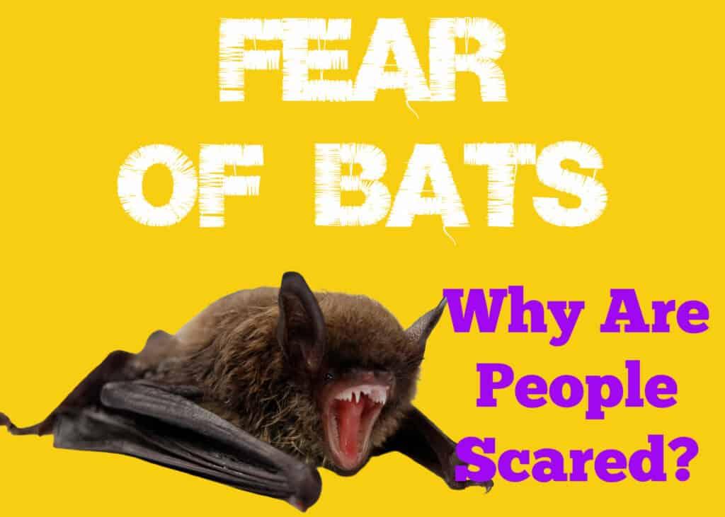 Fear of Bats in People