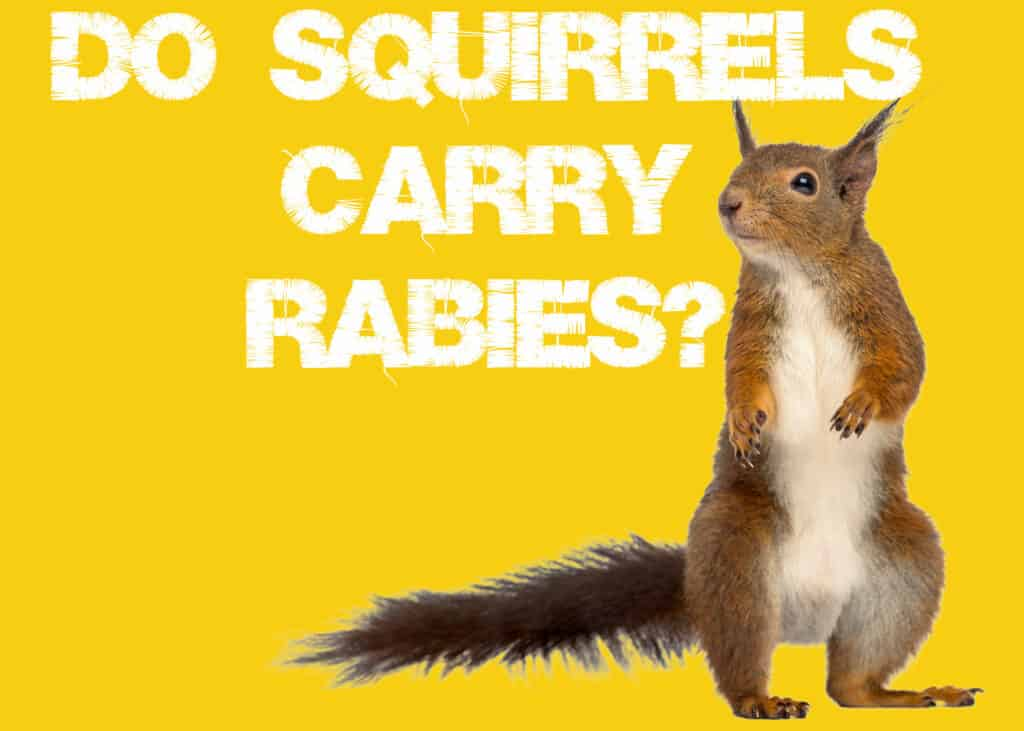 Do Squirrels Carry Rabies
